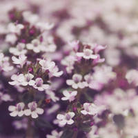 Flower Carpet by anneclaires