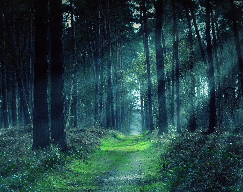 Magic Forest By Anneclaires On Deviantart