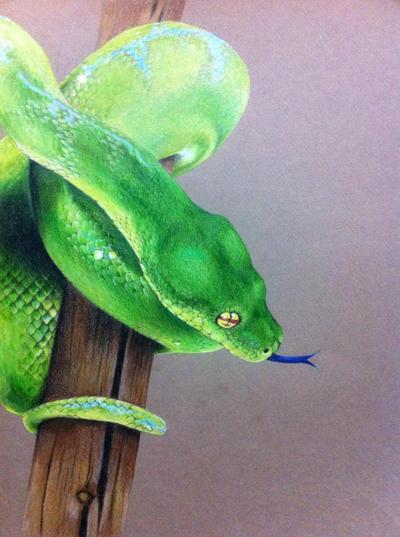 Green Tree Python by Hyokenseisou