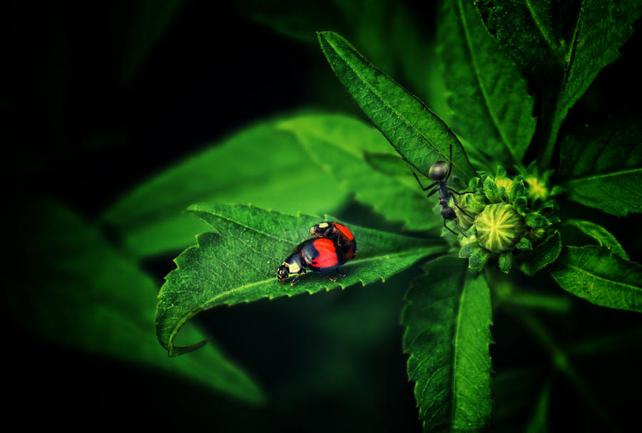 Familia Insecta by dukeofspade