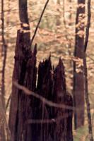 Dead Tree by ciseaux