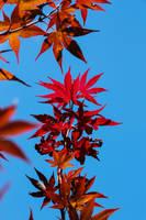 Autumn Leaves by ciseaux