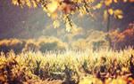 Bright Crops