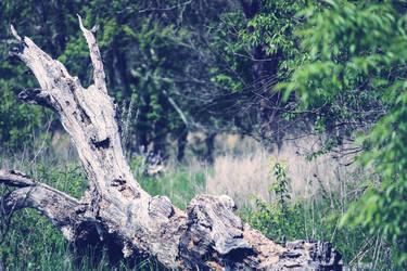 the dead trees by ciseaux