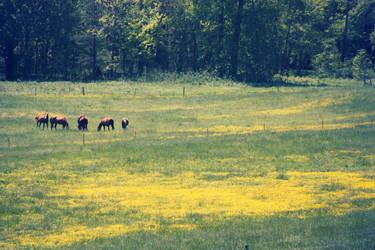 horses by ciseaux