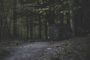 the old kiln in the woods by ciseaux