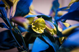 Tiger Lilies en bleu by ciseaux