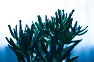 succulent dream by ciseaux