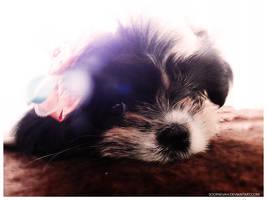 Pretty Puppy Yuki