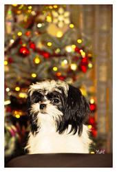Happy Holidays from Yuki