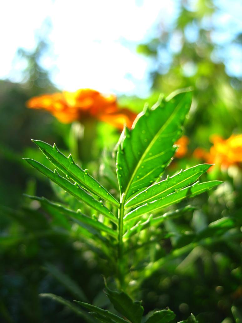 Sunny day in garden by monikabuz