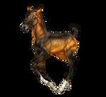 Aralkum Foal