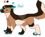 Owl (Repost)