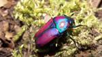 Beautiful little Beetle