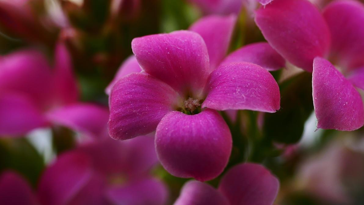 Pink Flowers By Marigold95 On Deviantart