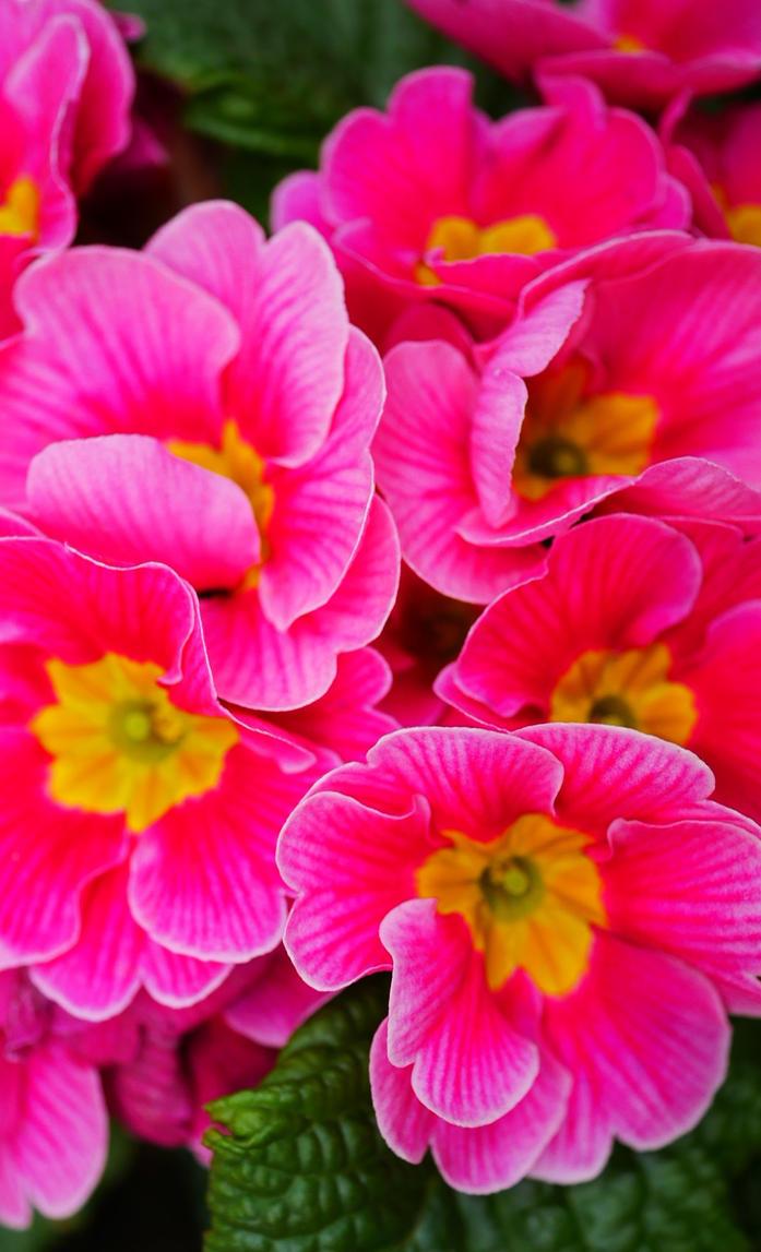 Spring Flowers 2 By Marigold95 On Deviantart