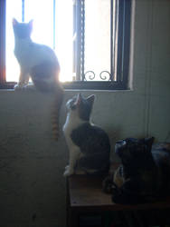 Three cats and a window