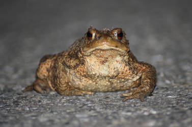 minging toad by Jule92