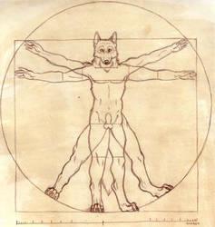 The Anthro Body by Korrok