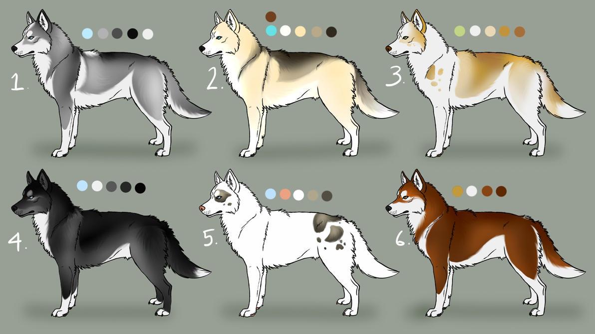 Siberian Husky Adoptables: Closed by Sedillo-Kennels on DeviantArt