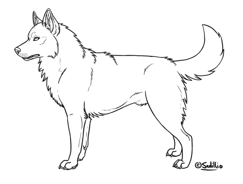 Free siberian husky lineart by sedillo kennels on deviantart for Husky puppy coloring pages