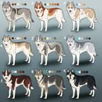 Pure Siberian Husky Adoptables 2: CLOSED