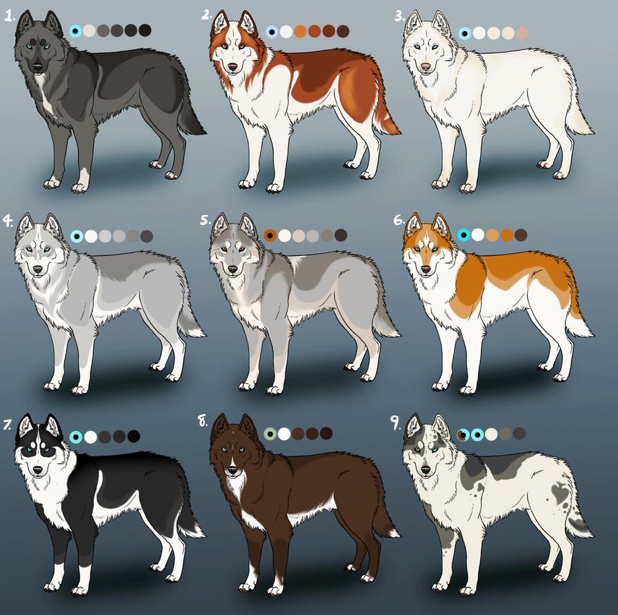 Pure Siberian Husky Adoptables 4 Closed By Sedillo