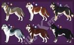 Siberian Husky Imports 02: CLOSED!