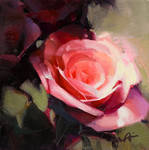 Abstracted Rose 2