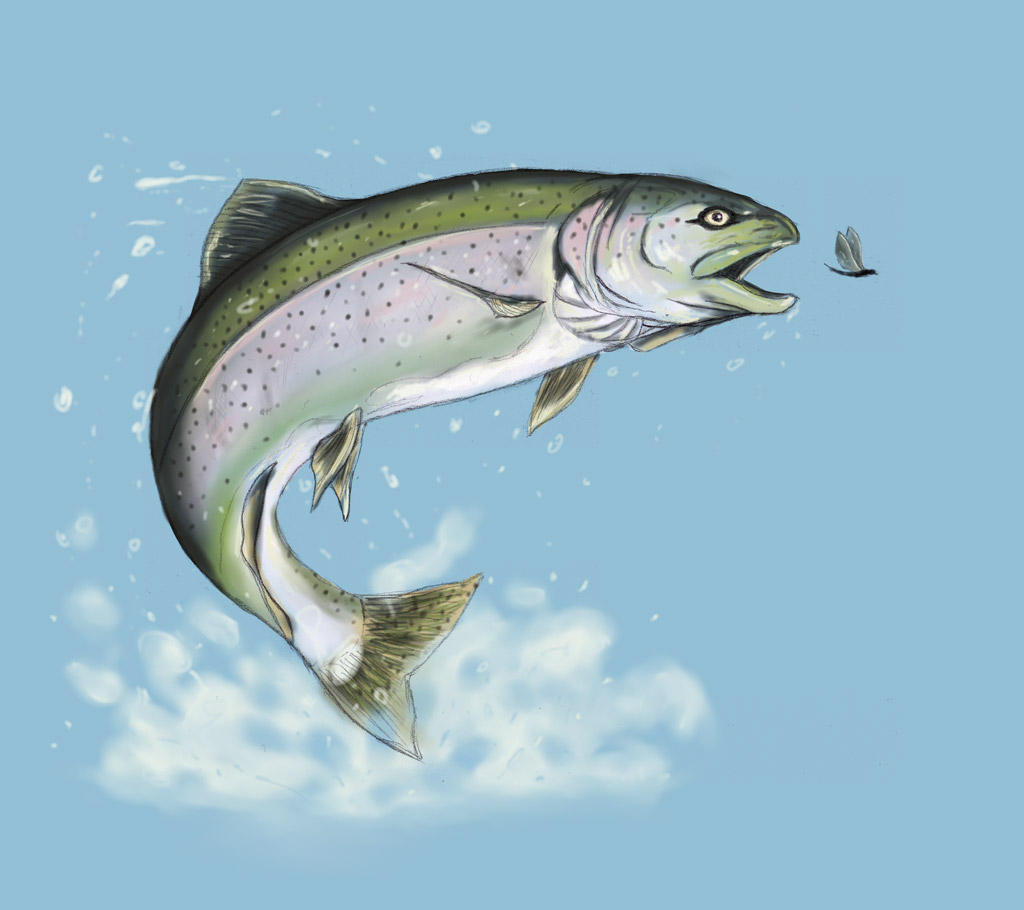 Rainbow trout by sasabralic on deviantart for Trout fish pictures