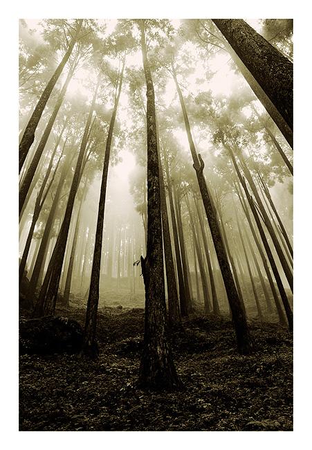 .:Mystic Woods:. by sasonian37