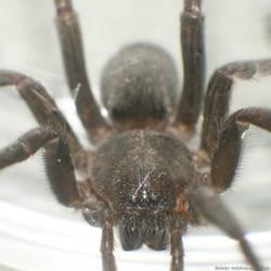 unidentified spider