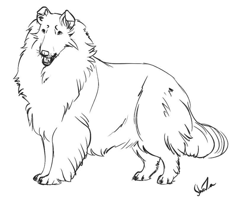 Rough collie lineart pay to use by forgottenamnesty on for Collie coloring pages