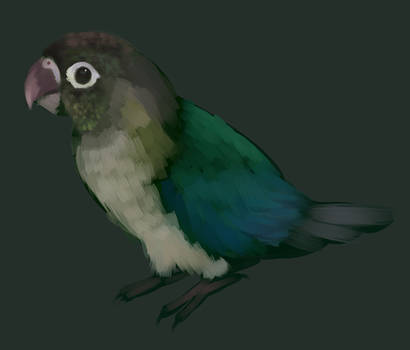 Green Cheeked Conure by ForgottenAmnesty