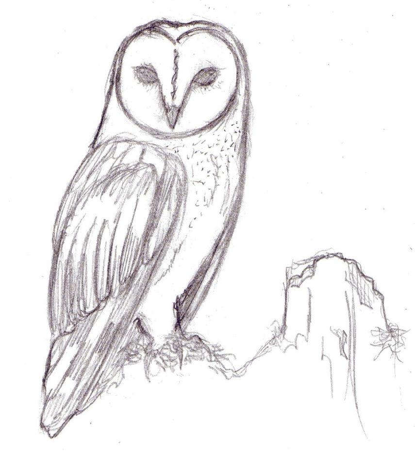 barn owl by MBloodriver on DeviantArt