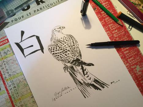 Bai the Gyr Falcon