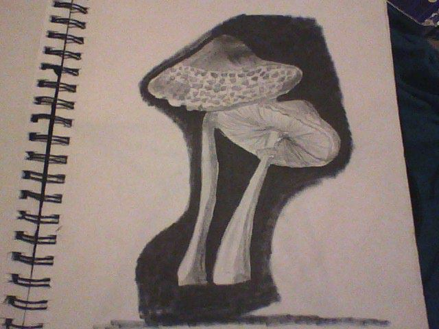 Mushrooms (black and white) by Adriast