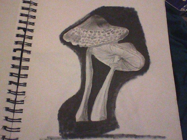 Mushrooms (black and white) by Adriast