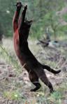 cat attack2