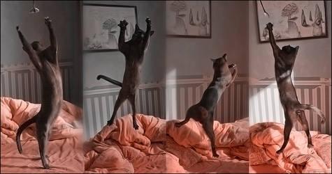 cat ballet