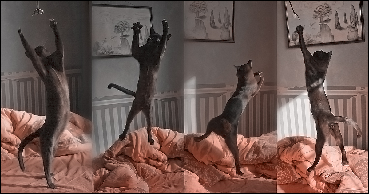 cat ballet by cougarLV