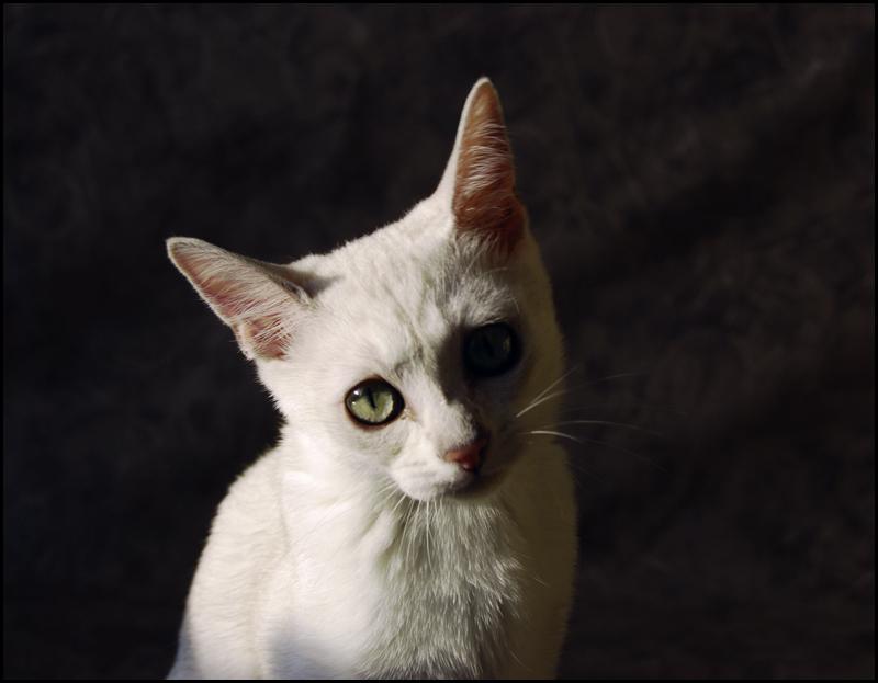 sad cat by cougarLV on DeviantArt