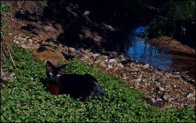 cat in wild3
