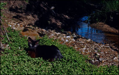 cat in wild3 by cougarLV