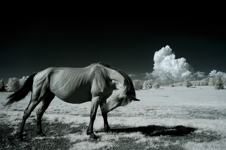 angry mood - infrared by Konczey-Zsolt