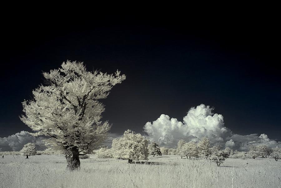 gloomy mood by Konczey-Zsolt