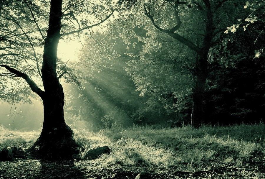 land of elves - infrared by Konczey-Zsolt