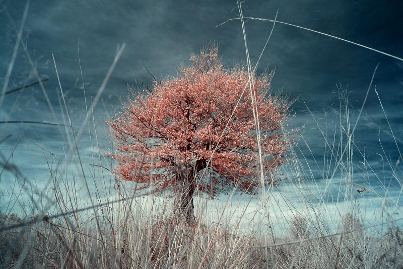 a Bugs Life - infrared by Konczey-Zsolt
