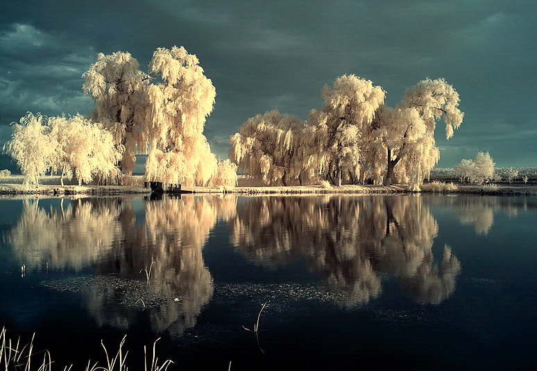 the mirror pool - infrared by Konczey-Zsolt