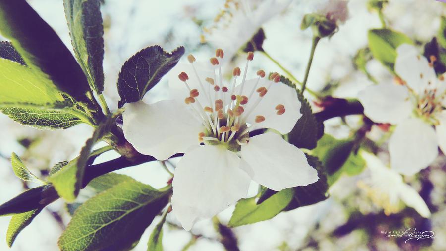 wallpaper - flowers 01 by diesnail